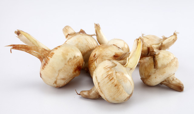 Arrowroot – sources, health benefits, nutrients, uses and constituents at NaturalPedia.com