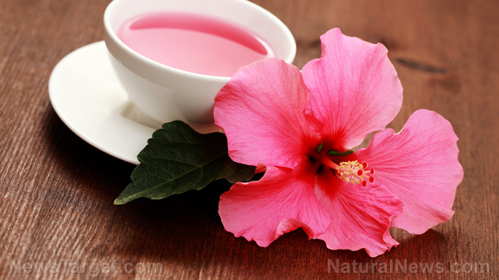 Hibiscus Sources Health Benefits Nutrients Uses And