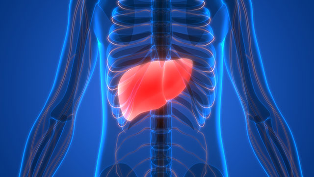 Liver cancer causes side effects and treatments at naturalpedia the liver is an important organ in the body it removes toxins from the bloodstream creates bile to help with fat digestion produces substances that aid ccuart Choice Image